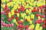Lễ hội hoa xuân rực rỡ Sài Thành