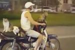 Video: Người Việt đưa mèo đi chơi trên xe Dream gây chấn động cộng đồng mạng thế giới