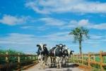 Vinamilk là đại diện duy nhất của Việt Nam vào top doanh nghiệp xuất sắc nhất Châu Á