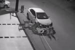 Xem đàn chó xé toạc chiếc xe hơi trong giây lát