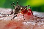 Long An: Phát hiện một bệnh nhi nhiễm zika