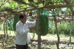 Hinh anh Video: Qua bi dao khong lo o Binh Dinh