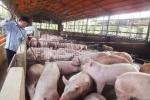 Chuyện lạ: Giá thịt lợn bằng 2 cốc trà đá