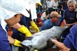 Cá ngừ Việt Nam đạt mức đấu giá 22 triệu đồng/con