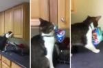 'Siêu trộm' mèo mở tủ bếp lấy bim bim gây 'bão mạng'