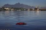 Olympic Rio 2016: VĐV thi bơi trong vịnh xác chết?