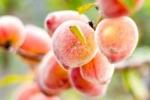 5 loại trái cây là 'thần dược' cho cơ thể trong mùa mưa