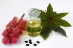 Dầu thầu dầu: Sự lựa chọn hoàn hảo cho sức khỏe và làn da
