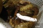 Cận cảnh loài hải sản cứ 200.000 con mới có 1 con biến dị kỳ lạ như vậy