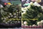 Phân biệt cải chíp Việt Nam và Trung Quốc