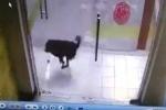 Phì cười clip mải truy đuổi mèo, chó đâm đầu vào cửa kính