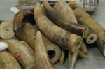 Việt Nam sẽ bị cấm vận thương mại nếu không chống buôn bán động vật hoang dã