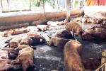 Sở Tài nguyên môi trường Vĩnh Phúc thanh tra tình trạng ô nhiễm tại các khu chăn thả tự phát