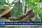 Nông dân Quảng Ngãi sáng tạo cách trồng rau quả sạch bằng chai nhựa phế thải