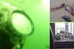 Kết luận nguyên nhân cái chết của thợ lặn Formosa