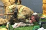 Rơi nước mắt xem lính cứu hỏa hô hấp nhân tạo, hồi sinh chú chó ngạt khói