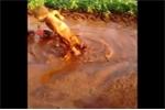 Em bé cười khanh khách khi ngã vào vũng lầy