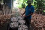 Tin 23/8: Doanh nghiệp Việt thừa nhận cà phê trộn đậu nành, trứng gà ta 'xịn' chưa chắc đã 'xịn'