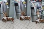 Chó cưng đồng lõa giúp em bé mở tủ lạnh khiến dân mạng bật cười
