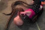 Clip: Bé gái 14 tháng tuổi để trăn cuốn mình