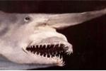 10 sinh vật biển đáng sợ nhất thế giới