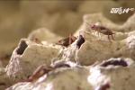 Nuôi bọ cạp, rắn mối, vua côn trùng miền Bắc kiếm tiền tỷ mỗi năm
