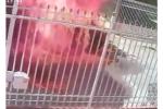 Để ô tô trước cổng, chủ nhà tẩm xăng đốt cháy thành than