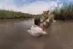 Video: Sư tử khổng lồ bổ nhào vào người đàn ông xin được vuốt ve