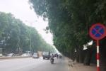 Sắp chặt hạ, chuyển hơn 1.300 cây xanh ở Hà Nội