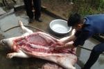 1kg thịt lợn bằng 2 cốc trà đá: Vật vã tự giải cứu, nông dân tích trữ ăn cả tháng