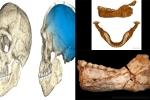 Tiết lộ bằng chứng chấn động về nguồn gốc nhân loại