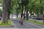Chặt hạ, di dời hơn 250 cây xanh để thi công dự án cầu Thủ Thiêm 2