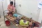 Hơn 50 học sinh tiểu học bị ngộ độc vì ăn quả ngô đồng