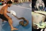 Chàng trai cả gan trêu chọc rắn 'khủng', nhét nhện độc vào miệng