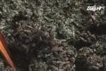 Cận cảnh gạo nấu lên vón cục đen sì, có mùi hắc ở Đồng Tháp