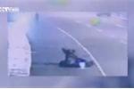 Ngựa 'điên' phi nước đại, quật ngã xe máy trên phố