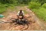 Người đàn ông thả gần 300 con rắn vào rừng