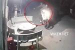 Clip: Hai 'cẩu tặc' dùng súng điện trộm chó trong chớp mắt