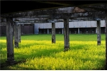 Cận cảnh trường bắn lạc hậu khiến người Hàn kinh ngạc về Hoàng Xuân Vinh