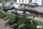 Hiện trường cây xanh gãy đổ đè trúng ô tô trên phố Hà Nội