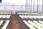 Nông trại trồng rau không cần đất độc đáo ở Quảng Ninh