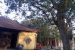 Video: Sự thật về cây sưa 50 tỷ đồng khiến dân làng 'đổ máu'
