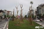 Tranh cãi gay gắt việc trồng cây phượng trên tuyến đường đắt nhất hành tinh