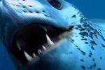 Clip: Vụ hỗn chiến đẫm máu của các sát thủ đại dương