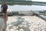 Cá nuôi chết trắng lồng ở Huế do thủy điện không xả nước