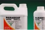 Lũ lượt nhập viện vì tự tử bằng hóa chất cực độc Paraquat