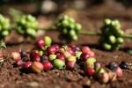 Buôn Mê Thuột - Những đồn điền cà phê trăm năm