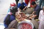 Thực hư thịt cóc độc đến mức độ nào?
