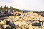 Vật nuôi chết chóc, bốc mùi nồng nặc bên bãi rác nghi đổ hóa chất