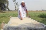Kỳ quái cụ bà 78 tuổi khỏe như thanh niên nhờ ăn 2kg cát mỗi ngày
